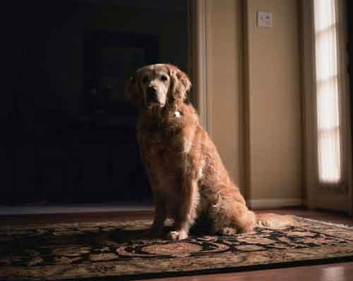 9/11 dog portraits
