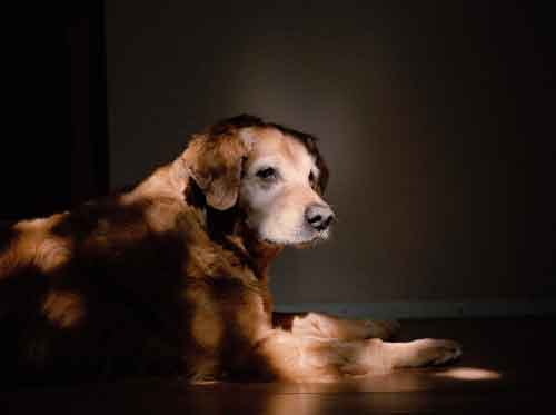 9/11 dogs portraits