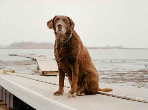 moxie 9/11 dogs