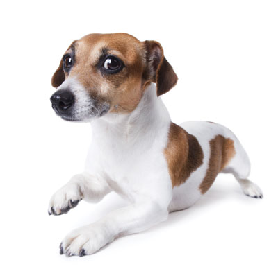 Dog Trick Training: Sit Up, Army Crawl & Leg Weave