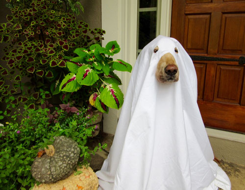 dogs who already won at halloween this year
