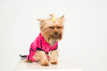dog in costume annoyed