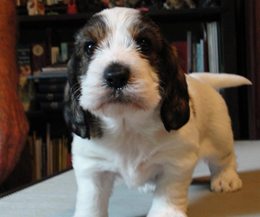 10 Friendly And Adorable Dog Breeds