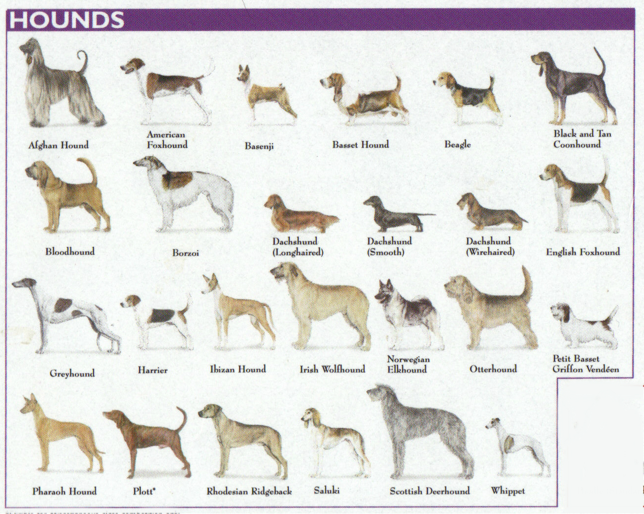 National Dog Show Groups
