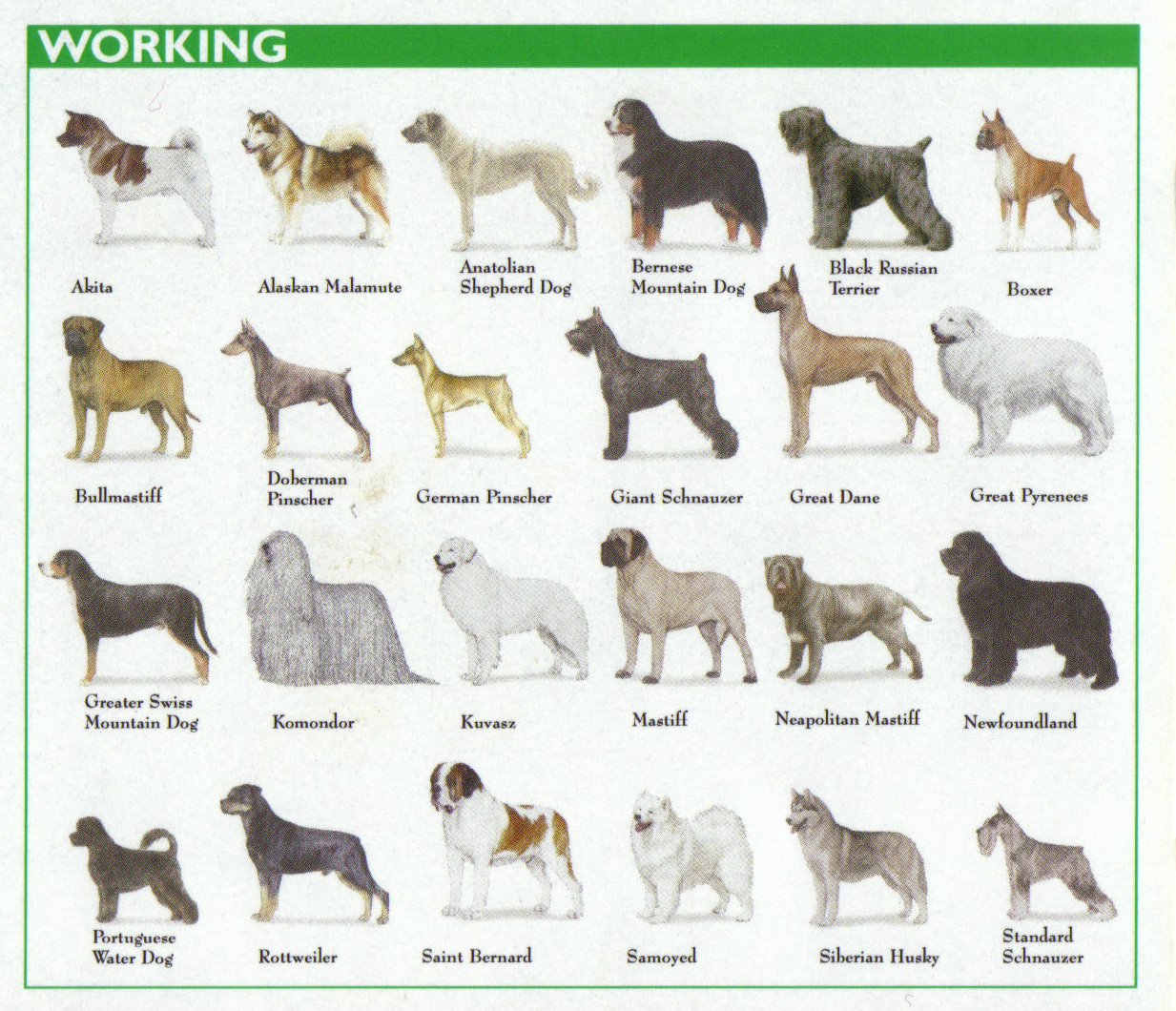 Breed Groups Of Dogs